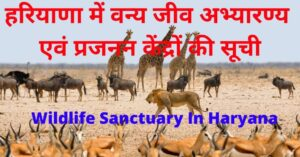 Wildlife Sanctuary In Haryana